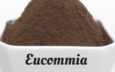 The magical healing tonic herb: Eucommia