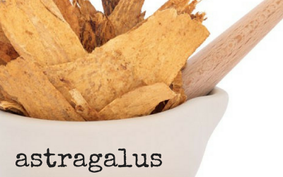 Astragalus, the immunity strengthener